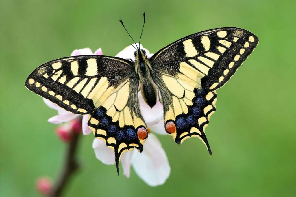 Fotos de borboletas (11)