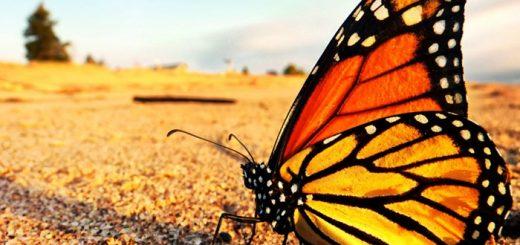 Fotos de borboletas