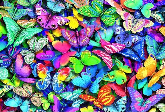 Fotos de borboletas (6)