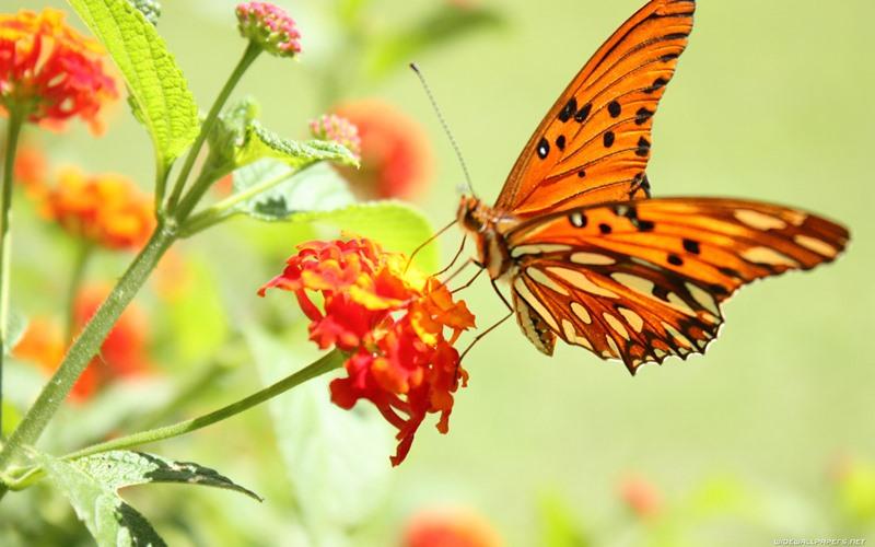 Fotos de borboletas (7)