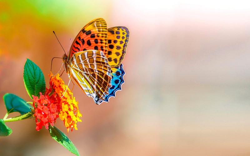 Fotos de borboletas (9)