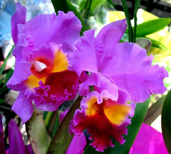 Fotos perfeitas de flores muito lindas