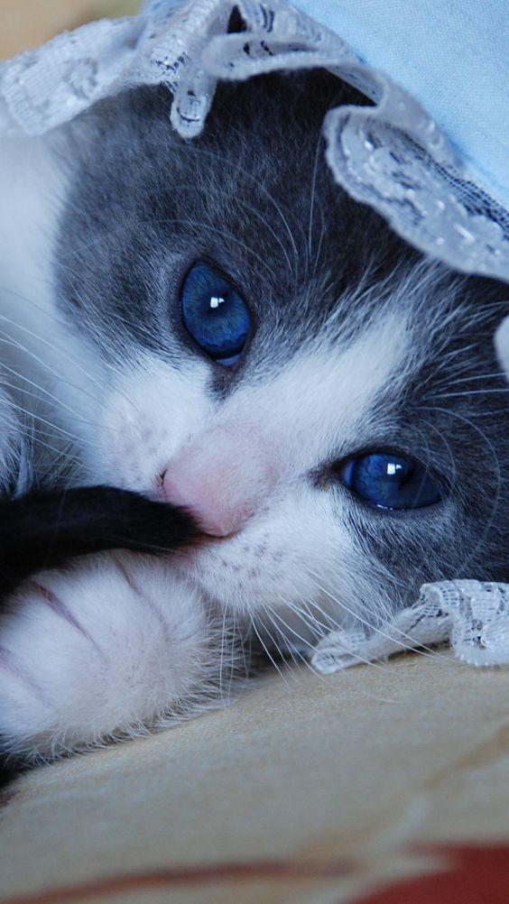 Wallpapers de gatos fofos em HD para celulares